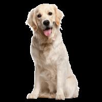 Produits pour chiens et chiots - alimentation - accessoires